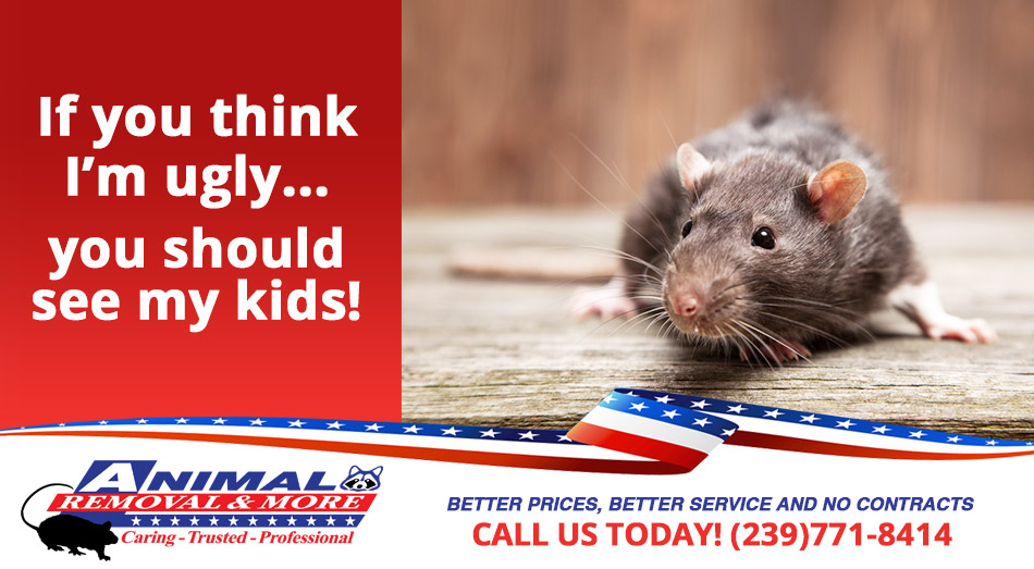 Rat Removal in and near Cape Coral Florida