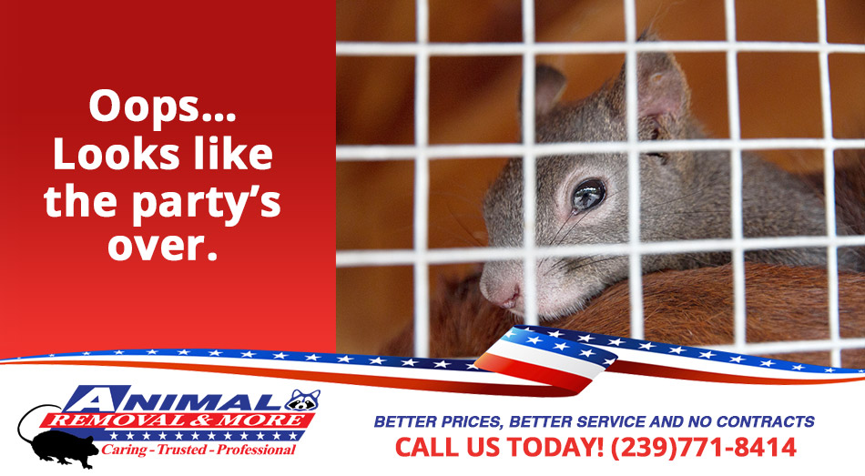Wild Life Removal in and near Cape Coral Florida