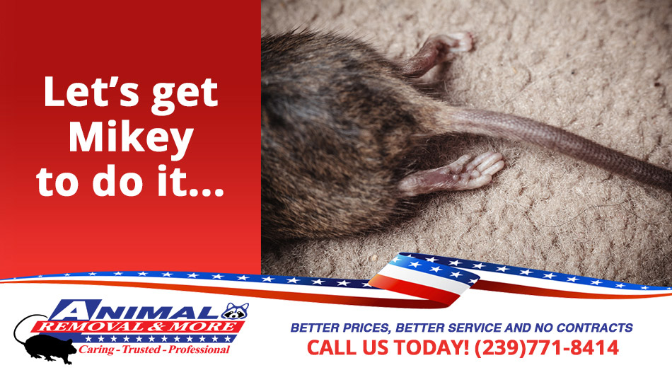 Dead Animal Removal in and near Fort Myers Beach  Florida