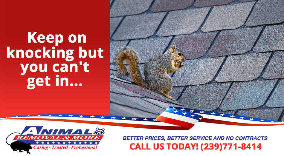 Animal Proofing and Bird Proofing in and near Golden Gate Florida