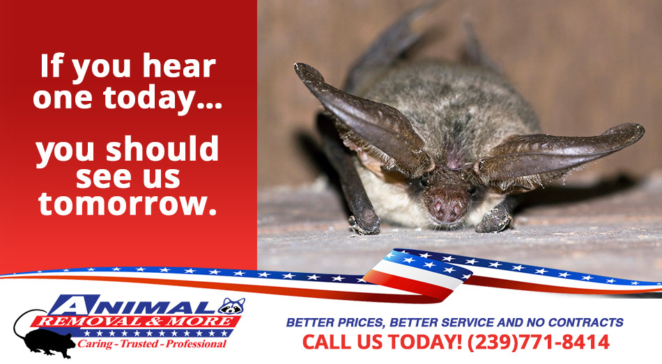 Animal in Attic Removal in and near Naples Florida