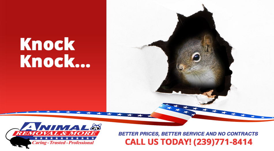 Animal in Wall Removal in and near Naples Florida