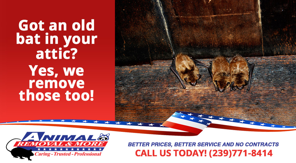 Bat Removal in and near Naples Florida