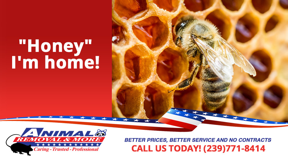 Bee Removal in and near Naples Florida