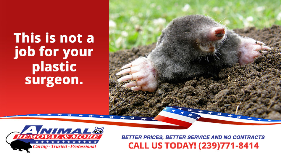 Vole and Mole Removal in and near Naples Florida