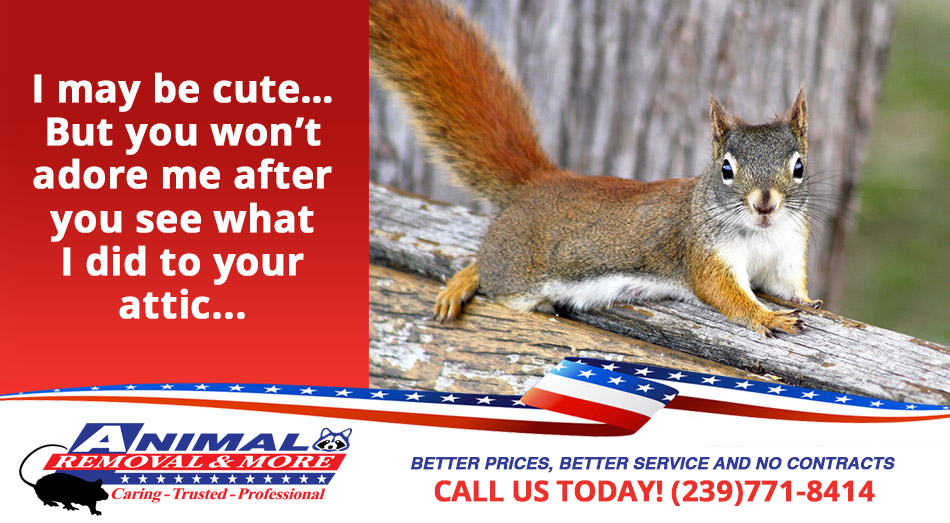 Squirrel Removal in and near North Fort Myers Florida