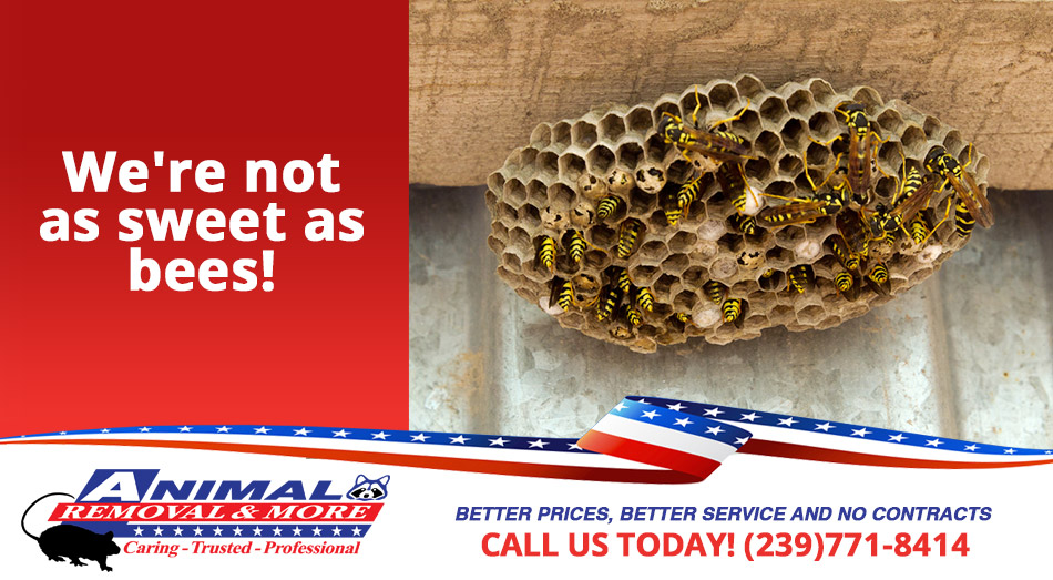 Wasp Removal in and near Punta Gorda Florida