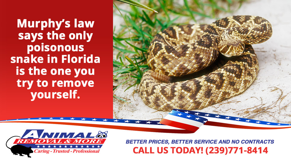 Snake Removal in and near Sarasota Florida